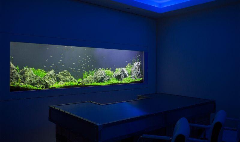 Aquarismo em SP na Vila Dalila - Aquarismo Ornamental