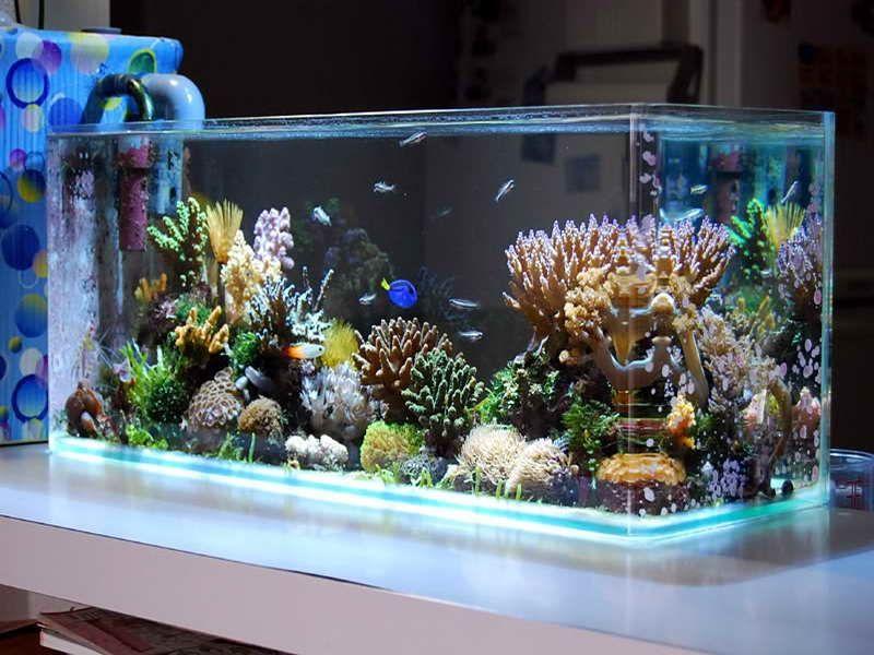 Aquarismo Online Loja no Pacaembu - Loja de Aquarismo