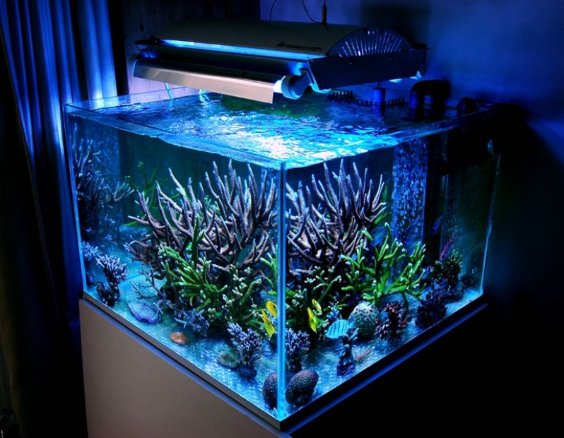 Aquarismo Online Preço na Saúde - Aquarismo Ornamental