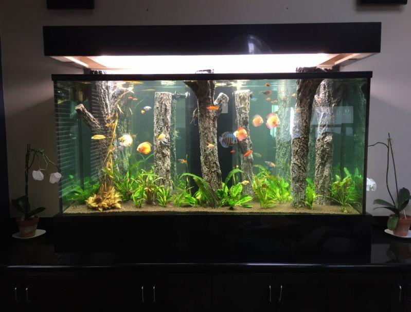 Aquarismos Jumbo no Limão - Loja de Aquarismo