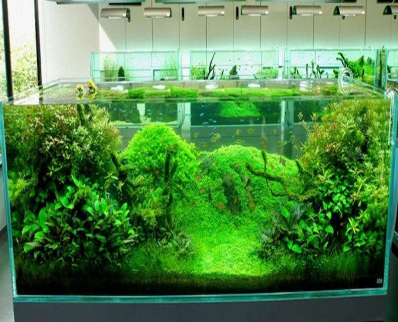 Aquarismos Plantado no Aeroporto - Aquarismo Ornamental