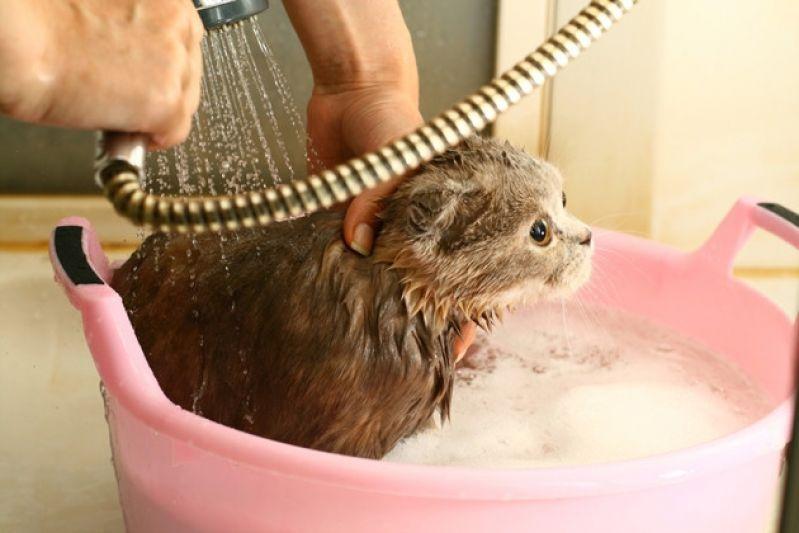 Banho para Cães em SP Preço em São Domingos - Banho para Cão