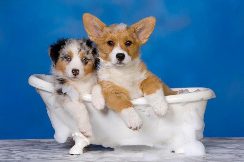 Banho para Cães Preço em Perus - Planos Mensais de Banho e Tosa