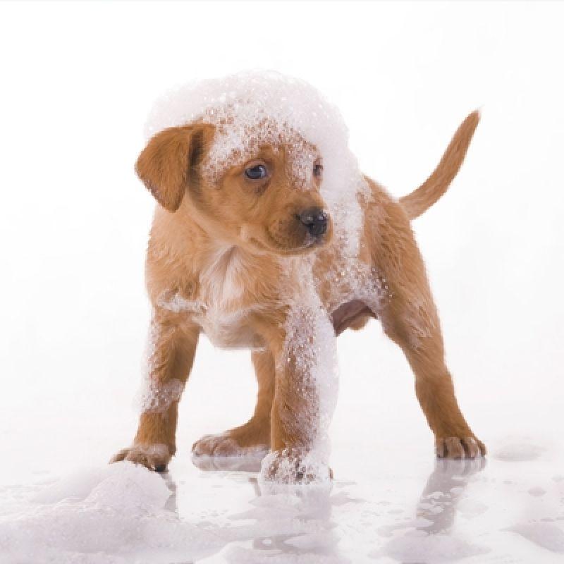 Banho Relaxante para Cachorro Preço no Brooklin - Banho para Cães em SP