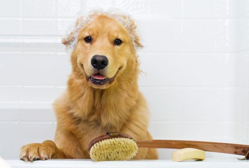 Banhos Relaxantes para Cachorros no Ibirapuera - Serviço de Banho para Cão
