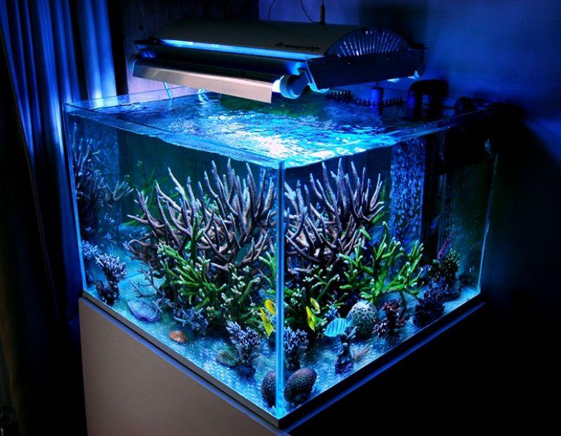 Loja de Aquarismo no Bairro do Limão - Aquarismo Plantado