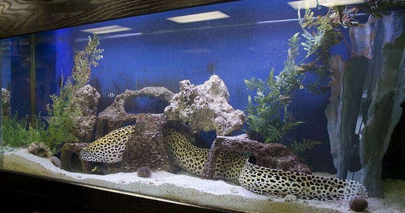 Onde Comprar Aquário para Peixe em Raposo Tavares - Aquário para Quarto