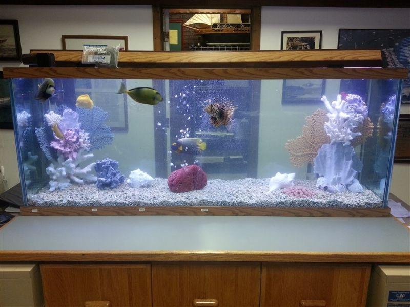 Onde Encontrar Aquário para Escritório no Jardim Europa - Aquário para Peixe Beta