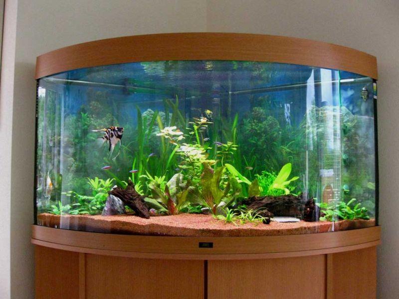 Onde Encontrar Aquário para Peixe Beta no Jardim Ângela - Aquário para Mesa de Escritório