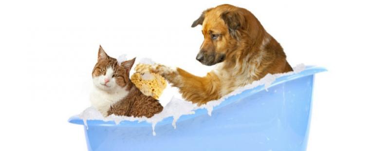Onde Encontrar Banho e Tosa Móvel em Santana - Banho para Cães em SP
