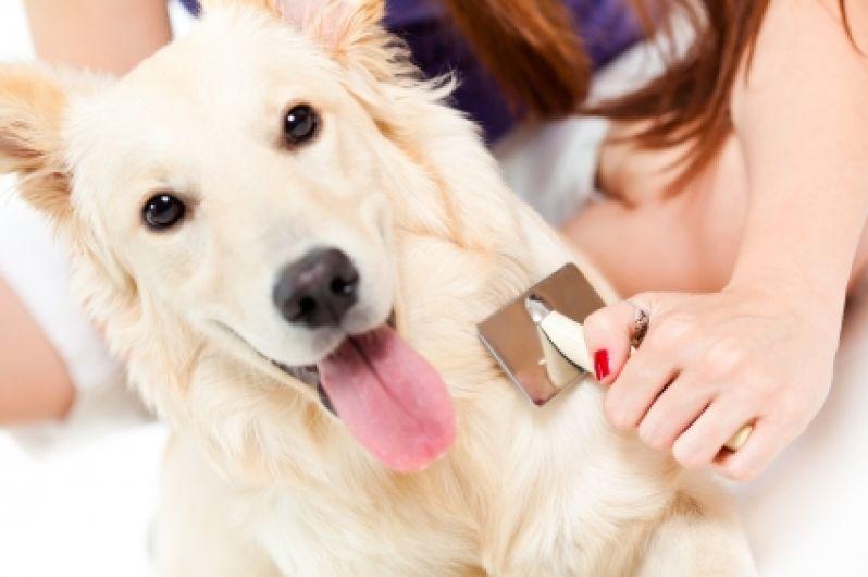 Onde Encontrar Serviços de Pet Shop em Engenheiro Goulart - Serviços de Pet Shop