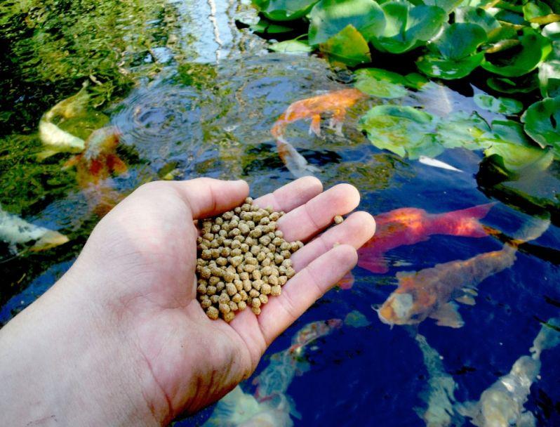 Onde Encontro Loja de Ração para Peixes no Capão Redondo - Loja de Rações em SP