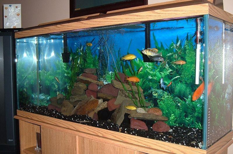Onde Encontro Venda de Aquário para Peixe no Jaraguá - Aquário para Mesa de Escritório