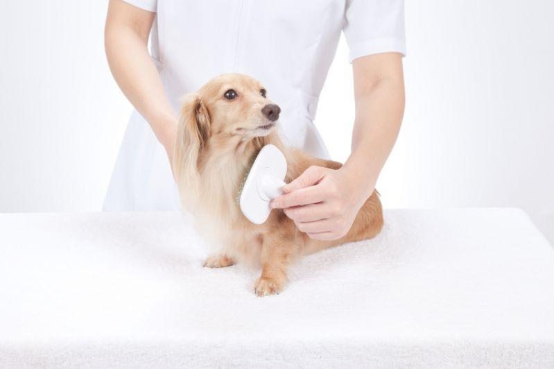 Pet Shop com Banho e Tosa na Vila Formosa - Serviços de Tosa