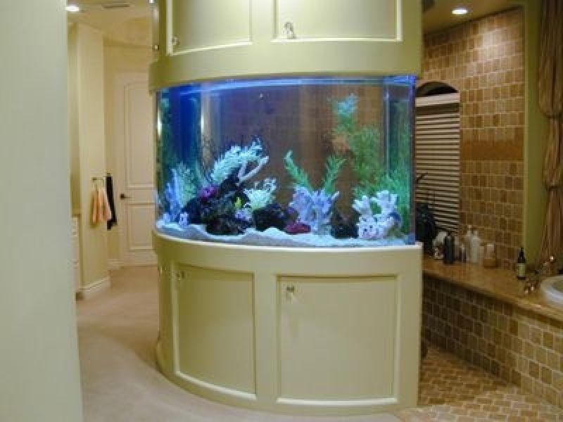 Quanto Custa Aquarismo Online Loja na Cupecê - Aquarismo Plantado