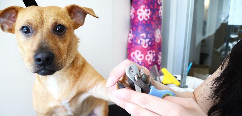 Quanto Custa Pet Shop com Banho e Tosa na Vila Marisa Mazzei - Banho e Tosa