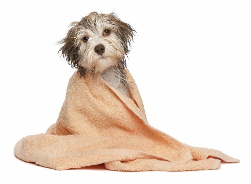 Quanto Custa Serviço de Banho para Cão na Vila Prudente - Banho para Cão