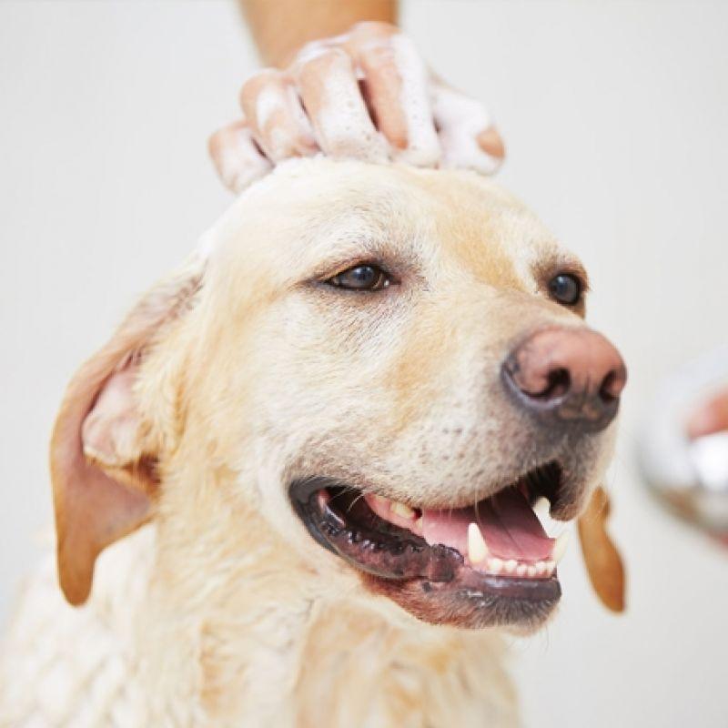 Quanto Custa Serviços de Banho e Tosa em Jaçanã - Serviços de Banho
