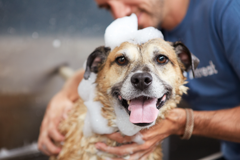 Serviço de Banho para Cão na Freguesia do Ó - Banho para Cão