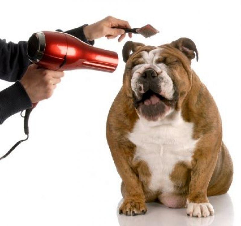 Serviços de Banho para Cachorros Parque São Domingos - Serviço de Banho para Cachorros