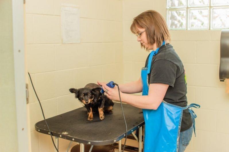Serviços de Banho para Cães no Jardim Paulistano - Serviço de Banho para Cães