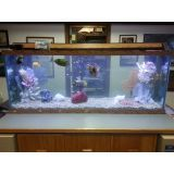 aquarismos online na Vila Medeiros