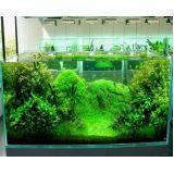 aquarismos plantado no Aeroporto