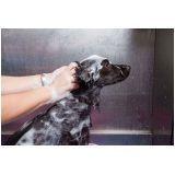 banho e tosa para cães preço na Anália Franco