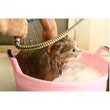 banho para cães em SP preço em Pirituba