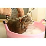 banho para cães em SP no Jockey Club