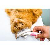 banho para cão na Saúde