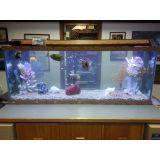 onde encontrar aquário para escritório no Pacaembu