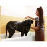 onde encontrar banho para cachorro filhote na Saúde