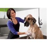 onde encontrar serviço de banho para cão em São Mateus