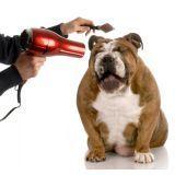serviço de banho para cães preço na Vila Ré