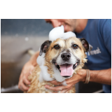 serviço de banho para cão na Saúde