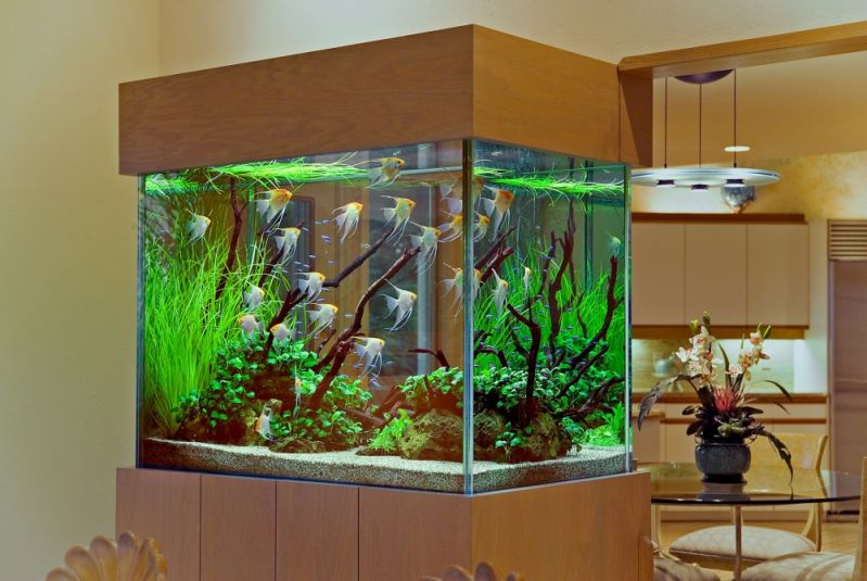 Venda de Aquário para Peixe em Pirituba - Aquário para Enfeite de Mesa